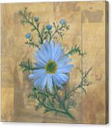 Russias Chamomile Canvas Print