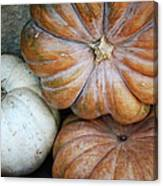 Rustic Pumpkins Canvas Print