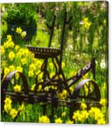 Rusty Plow In Daffodils  Canvas Print
