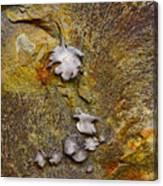 Rusty Red Peridotite With Lichen Canvas Print