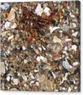 Rusty Seaweed Canvas Print