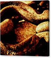 Rusty Shackle. Canvas Print
