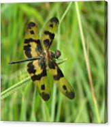 Ryothemis Dragonfly Canvas Print