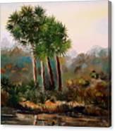 Sabal Palmettos Canvas Print
