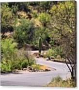 Sabino Canyon Road Canvas Print