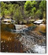 Sabino Creek Canvas Print