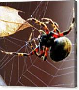 Sac Spider Catches A Leaf Canvas Print