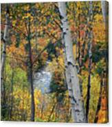 Saco River And Birches Canvas Print
