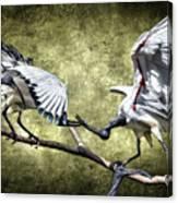 Sacred Ibis Photobombing Canvas Print
