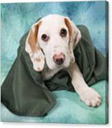 Sad Dog On Pastels Canvas Print