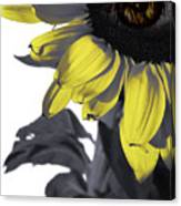 Sad Sunflower Canvas Print