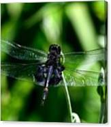 Saddlebag Dragonfly Canvas Print