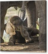 Safest Baby In Africa  Canvas Print