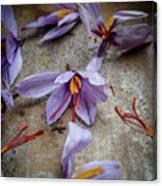 Saffron Flower Canvas Print