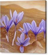 Saffron Flowers Canvas Print