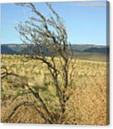 Sage Brush And Tumble Weed Canvas Print