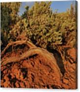 Sagebrush At Sunset Canvas Print