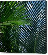 Sago Palm Fronds Canvas Print