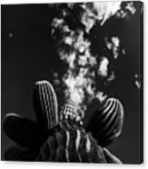 Saguaro And Clouds Canvas Print