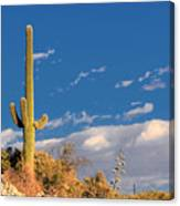 Saguaro Cactus - Symbol Of The American West Canvas Print