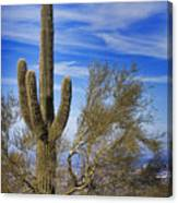 Saguaro Cactus Of The Desert Southwest Canvas Print