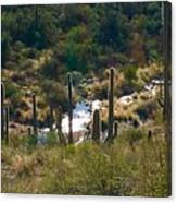 Saguaro Creek Canvas Print