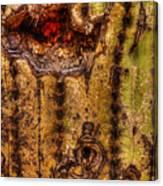 Saguaro Detail No. 18 Canvas Print