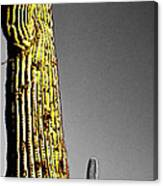 Saguaro Gestures Canvas Print
