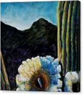 Saguaro In Bloom Canvas Print