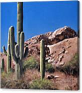 Saguaro National Monument Canvas Print