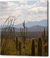 Saguaro National Park Az Canvas Print