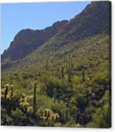 Saguaros And Other Greenery  Canvas Print