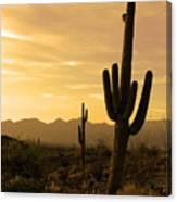 Saguaros At Sunset Canvas Print