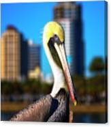 Saint Petersburg Pelican Canvas Print