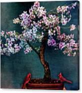Sakura Bonsai Acrylic Print By Chris Lord