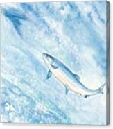Salmon Canvas Print