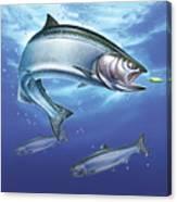 Salmon Painting Canvas Print