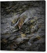 Salmon Run Canvas Print