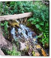 Mill Creek Canyon - Utah Canvas Print