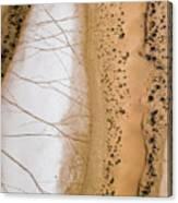 Salt Pans Deep In The Kalahari With 4x4 Canvas Print