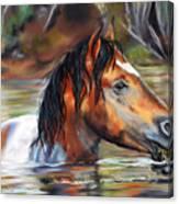 Salt River Tango Canvas Print