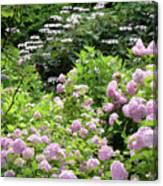 Pink Hydrangeas In Mirabell Garden Canvas Print