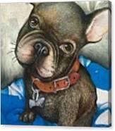 Sammy The French Bulldog Canvas Print