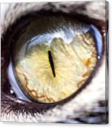 Sammy's Eye Canvas Print