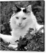 Sampson In Black And White Canvas Print