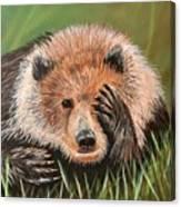 San Diego Bear Canvas Print
