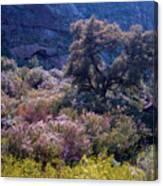 San Diego County Canyon Canvas Print