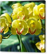 San Diego Yellow Orchids Canvas Print
