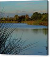 San Joaquin Wildlife Sanctuary Canvas Print