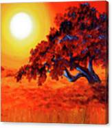 San Mateo Oak In Bright Sunset Canvas Print